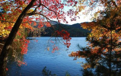 "Break Free of Your ""Color Box"": Let Nature Choose Your Color Palette"