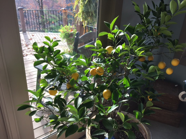 Gifts From My Lemon Tree