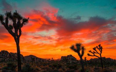 Bring The Colors Of Santa Fe Home